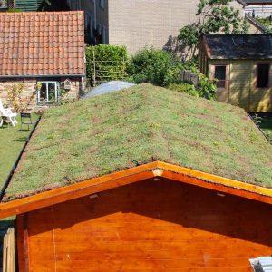 EcoRoof sedum licht hellende daken